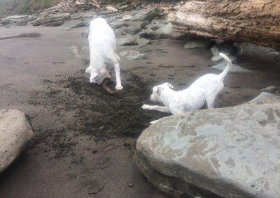Staff Dogs 26